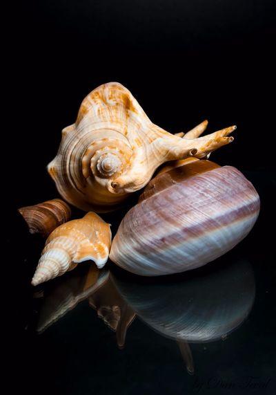 animal shell
