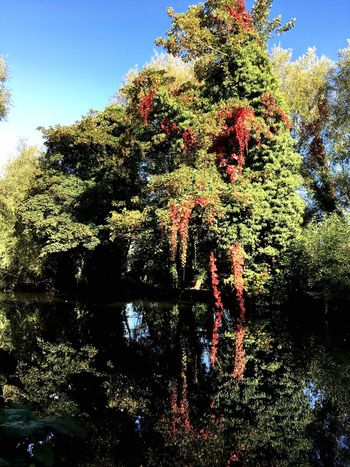 Nature Tree Water Reflection Tranquility Beauty In Nature Lastofsummer Autumn Colors Autumn🍁🍁🍁 Redandgreen Water Reflections Newbury Uk Calm Beauty In Nature