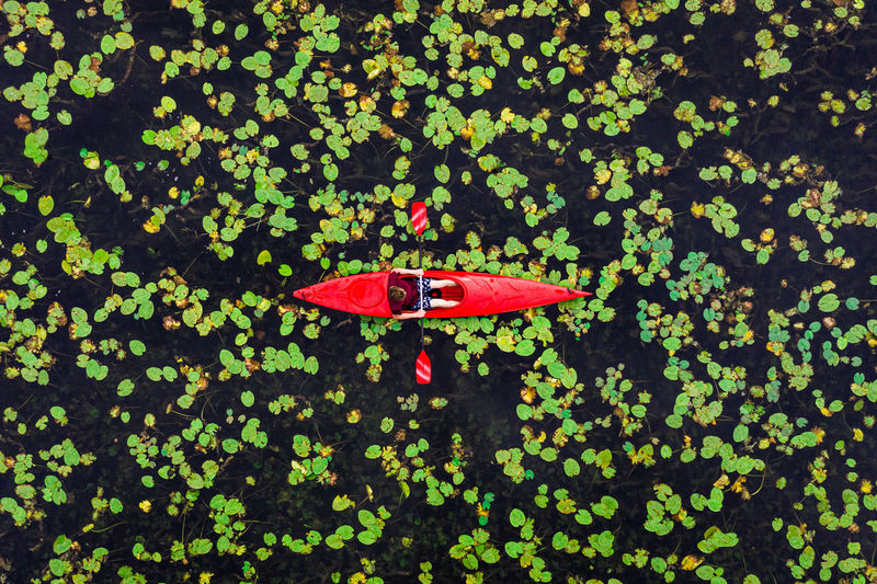 High angle view of red leaves floating on plants