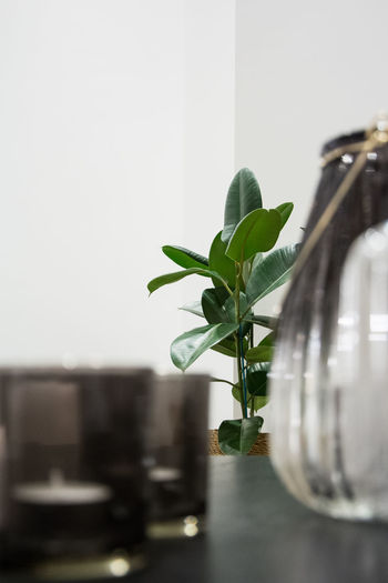 Leaf Plant Part Plant Green Color Indoors  Growth Nature No People Potted Plant Table Selective Focus Close-up Glass - Material Home Interior Vase Houseplant Container Day Fragility Transparent
