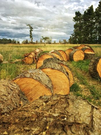 """""""Firewooding"""" IPS2016Nature Cutting Trees Firewood Trees And Sky"""
