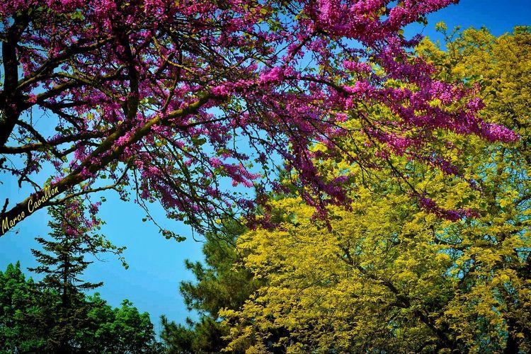 I tuoi intrecci di colori, le calde sfumature, le sovrapposizioni, miscele magiche sospinte come vento che accarezza vela... colorami, son la tua tela. (Colorami - Franco Mastroianni) Nature Hugging A Tree EyeEm Nature Lover Tree