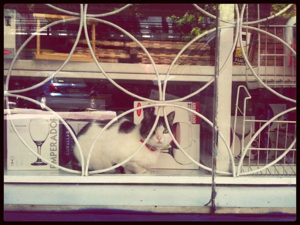 Pequeño gato no se vende, ¿o si? Cat Watching Shootermag Frame It!
