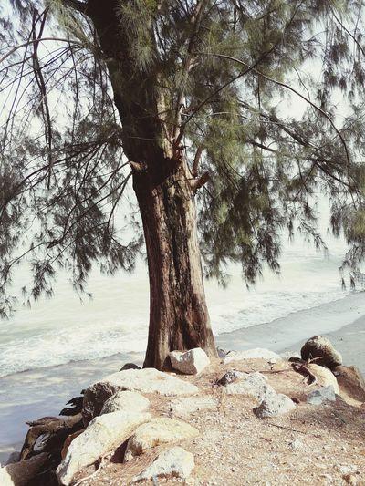 Quietmoment Alone Tree Beach Sand Sea Tree Trunk Branch Water Sky Landscape