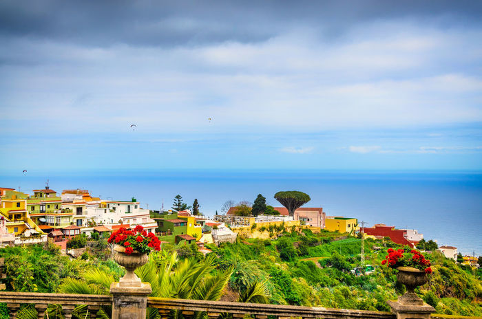 Los Realejos the small beautiful town in the north of Tenerife. Our view goes from the upper town center to the Atlantic, the dragon tree, a special tree here in Tenerife, completes the picture. Atlantic Ocean EyeEmNewHere Feliz-Photo Landscape Photography Barranco Beauty In Nature Building Exterior Cityscape Cloud - Sky Day Dragon Tree High Angle View Horizon Over Water Landmark Nature No People Outdoors Paraglider Scenics Sea Sky Tenerife Teneriffa Tree Water