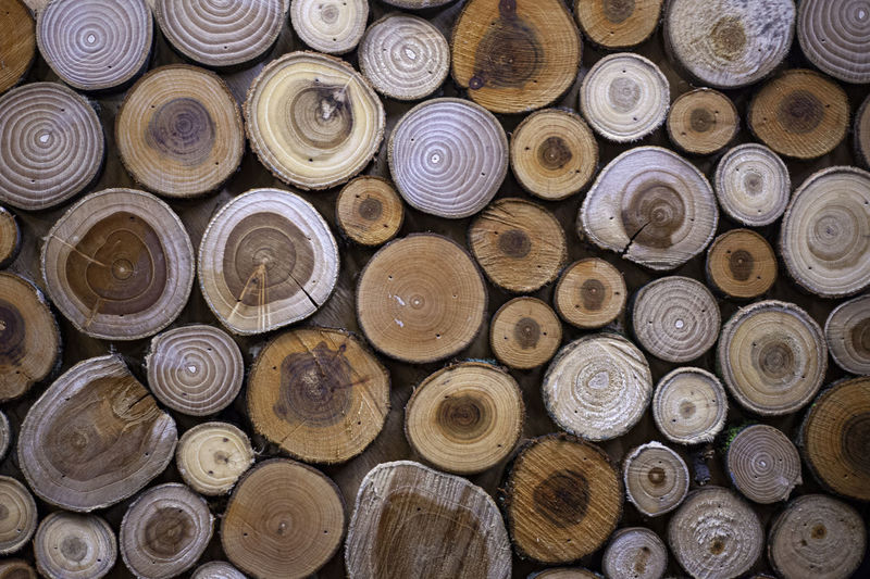 Saws of different species of wood. background from logs sawn and assembled together.