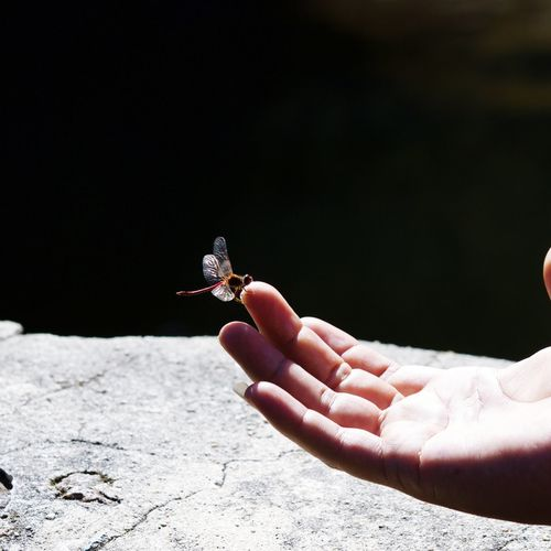 Human Hand Human Finger One Person Outdoors One Animal Holding Animals In The Wild Day Animal Wildlife People Close-up Animal Themes Nature Dragonfly