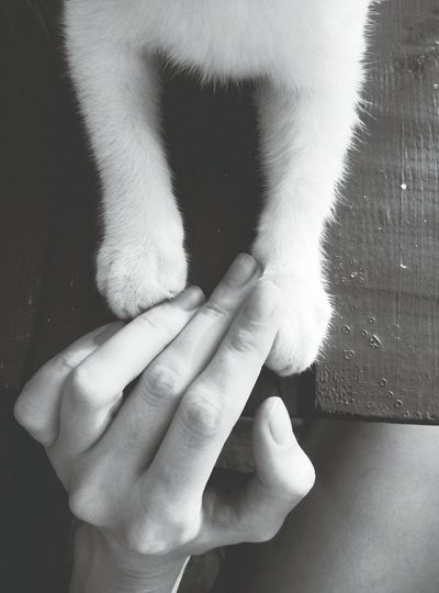 Human Body Part Human Hand Cats Of EyeEm Fluffy Fluffypaw