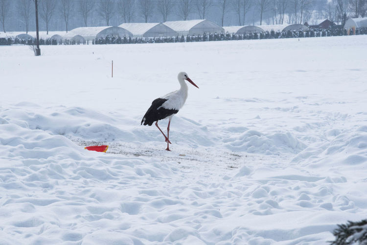 Bird perching on snow covered land