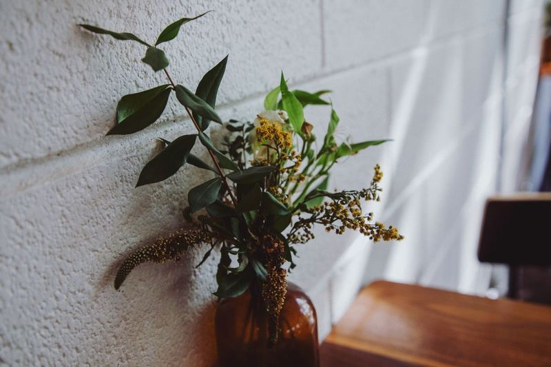 Germantown Coffee Plant Flower Flowering Plant Indoors  No People Wall - Building Feature Nature Vase Vulnerability  Fragility Close-up Plant Part Leaf Growth Home Interior Beauty In Nature Freshness Decoration Day Wall