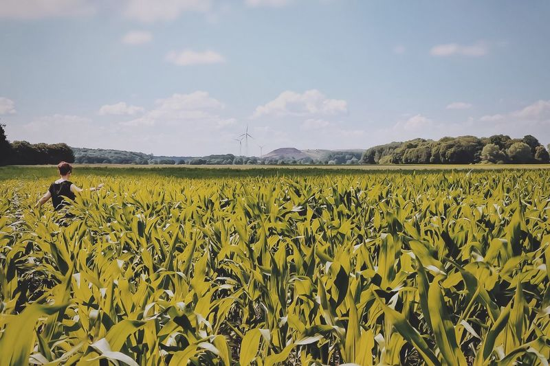Fields of
