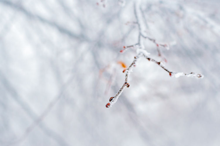 Close-Up Of Twig During Winter