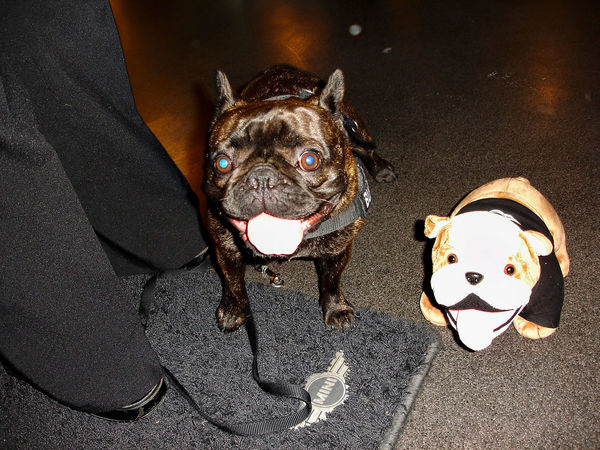 Lily the Bulldog next to the BMW MINI Teddy-Bully. :) Animal Themes Dog Domestic Animals Low Section Mammal MPOTM - WeekendChallengeNo1 Night No People One Animal Outdoors Pets Portrait Standing