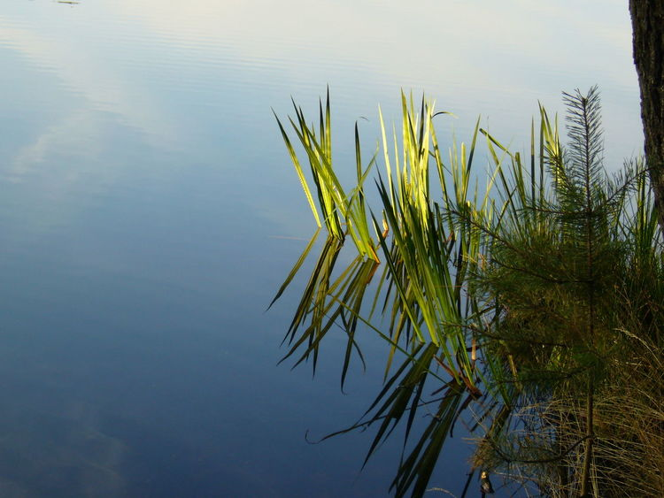 Nature Water Tree Reflection Lake Beauty In Nature No People Growth Tranquility Day Outdoors Needle - Plant Part Sky EyeEmNewHere