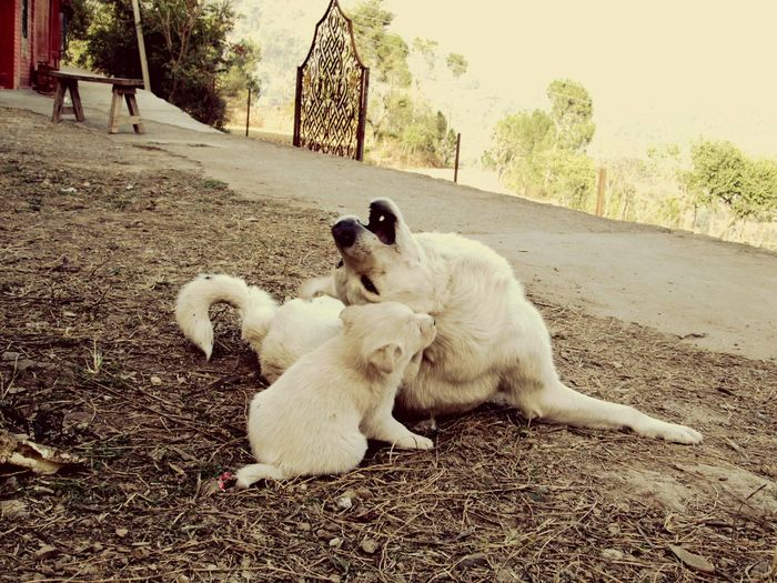 Dog enjoyed with her kid Pet Photography  Love White Dog Adorable Dog Puppy Canine Moments Of Happiness