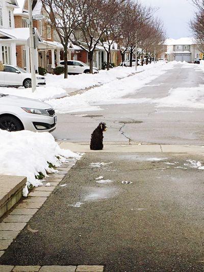 Dog Waiting Dog Life Dogoftheday