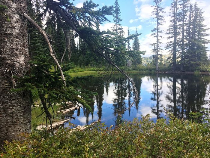 Tree Water Lake Reflection Tranquil Scene Tranquility Scenics Non-urban Scene Nature Growth Tree Trunk Beauty In Nature Sky Majestic Branch Day Calm Wilderness Standing Water Tourism Green Hiking Outdoors Solitude Idyllic