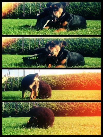 Show Me Your Compassion. Cat And Dog Photostrip