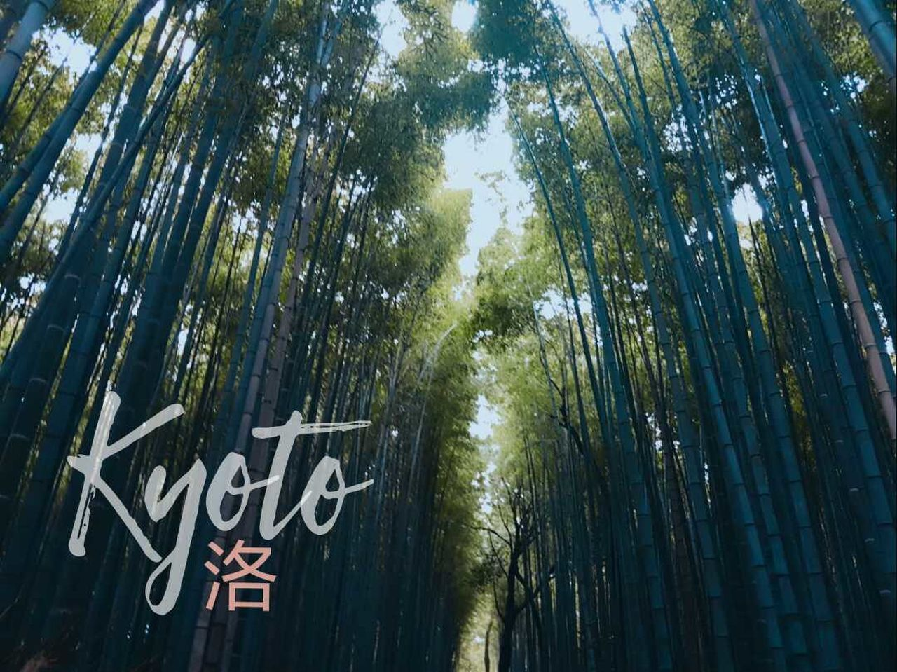 text, communication, day, tree, outdoors, low angle view, no people, growth, bamboo - plant, nature, bamboo grove