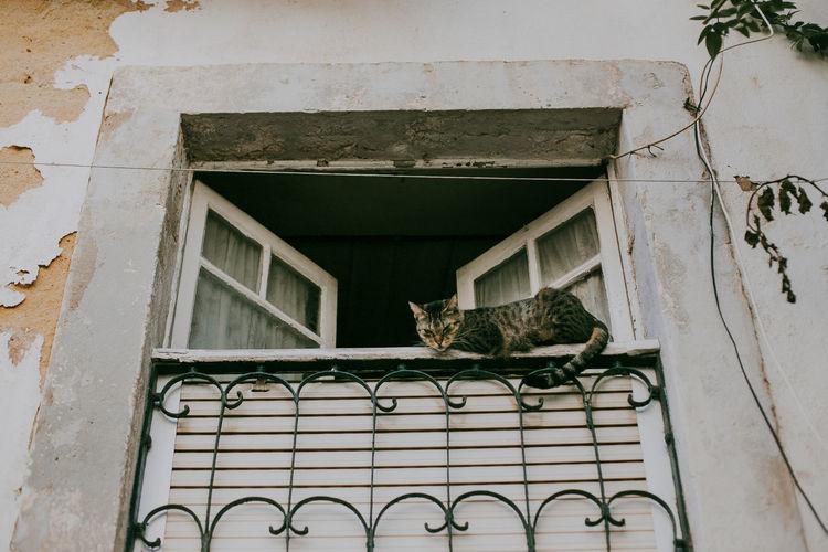 Window Animal Themes Domestic Cat Mammal Animal Outdoors Domestic Cat Building Exterior Lisbon Portugal Pets Building Heritage Alfama