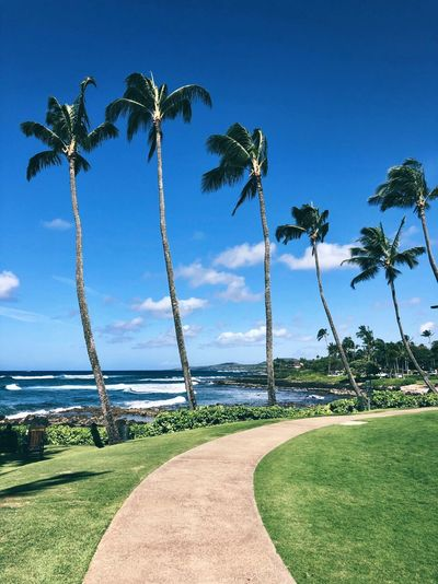 Hawaii Hawaii Life Plant Tree Tropical Climate Palm Tree Sky Growth Nature Beauty In Nature Blue Sunlight Tranquility Tranquil Scene Water