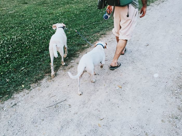 Rear view of dog walker with dogs