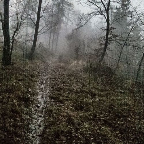 Sklblog Trail Grießberg Run Laufen Klusberg