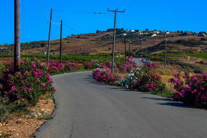 Road amidst flowering plants on land against sky