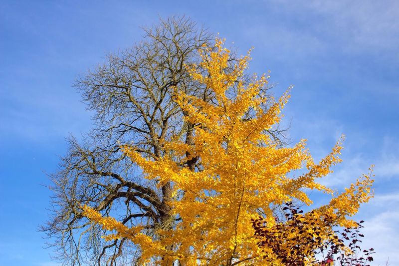 Low Angle View Of Autumn Trees