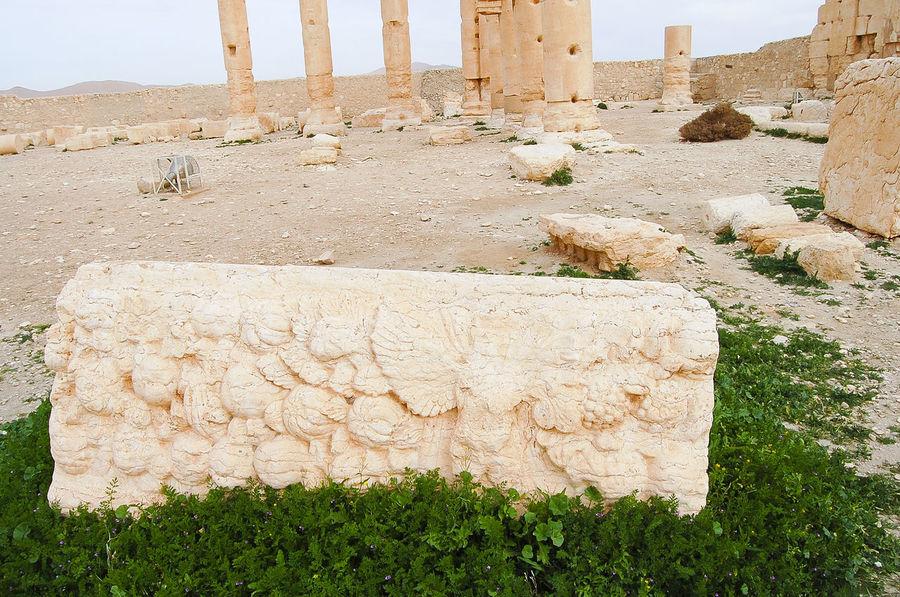 Palmyra Ruins - Syria Palmyra Ruins Ruins Syria  Ancient Civilization Nature Palmyra Roman