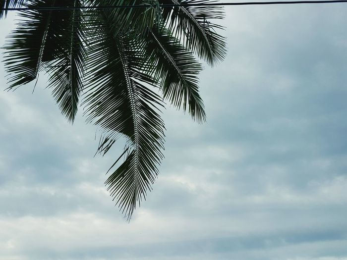 Beach and tree Palm Tree Sky Cloud - Sky Palm Leaf Low Angle View Palm Tree Sky Low Angle View Leaf Growth Cloud - Sky Tree Trunk Nature Scenics Tranquility Beauty In Nature Palm Leaf Cloud Tranquil Scene Day Outdoors Cloudy Palm Frond Focus On Foreground Blue