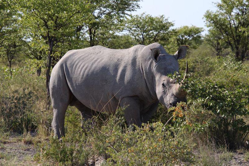 Rhino EyeEm