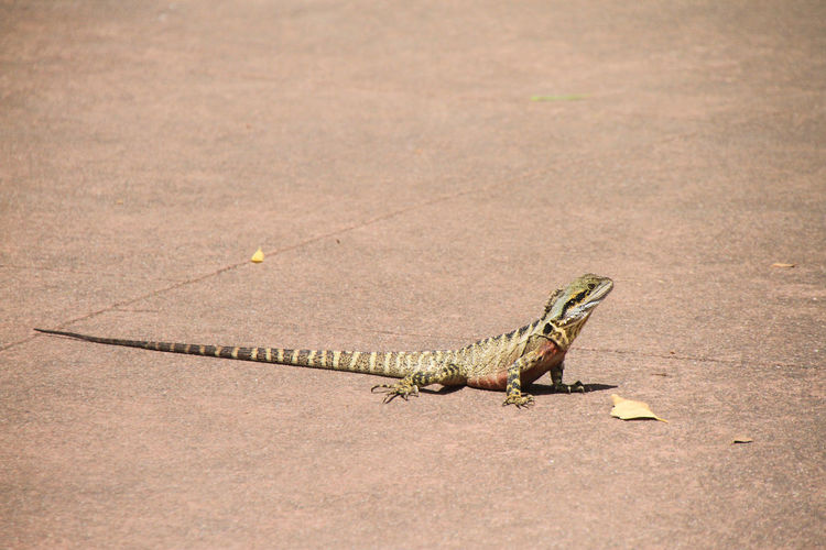 Close-up of lizard on ground