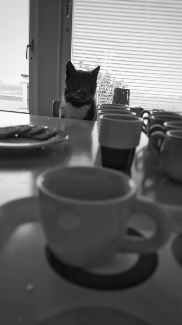 domestic cat, pets, feline, domestic animals, one animal, table, cat, animal themes, coffee cup, indoors, mammal, no people, drink, day, close-up