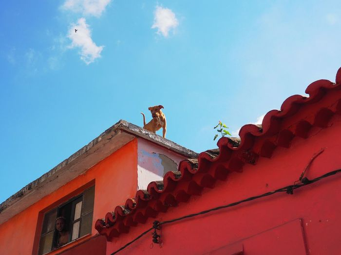 Architecture Low Angle View Sky Built Structure Building Exterior Building Roof Day Nature Animal Animal Themes Blue Bird Red No People House Vertebrate Cloud - Sky Outdoors One Animal Roof Tile Dog Red