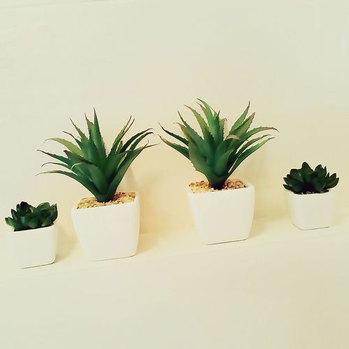 Minimalism Minimal Minimalobsession Cactus Enjoying Life Relaxing Taking Photos Snapshots Of Life Amazing Toilet