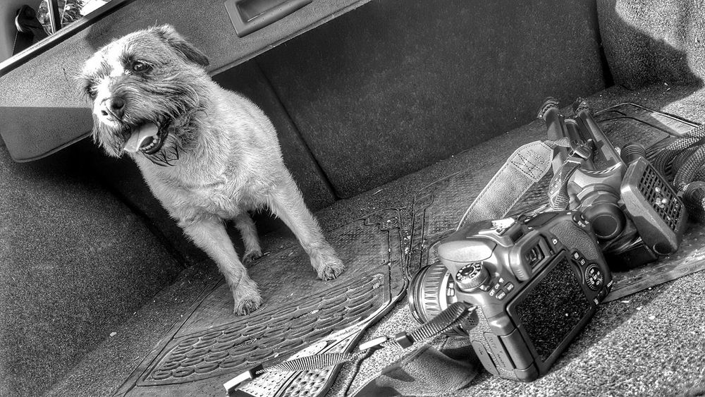 All i need on my walks Animal Themes Day Dog Border Terrier Terrier Camera Camera - Photographic Equipment Canon Pet Car Boot Blackandwhite