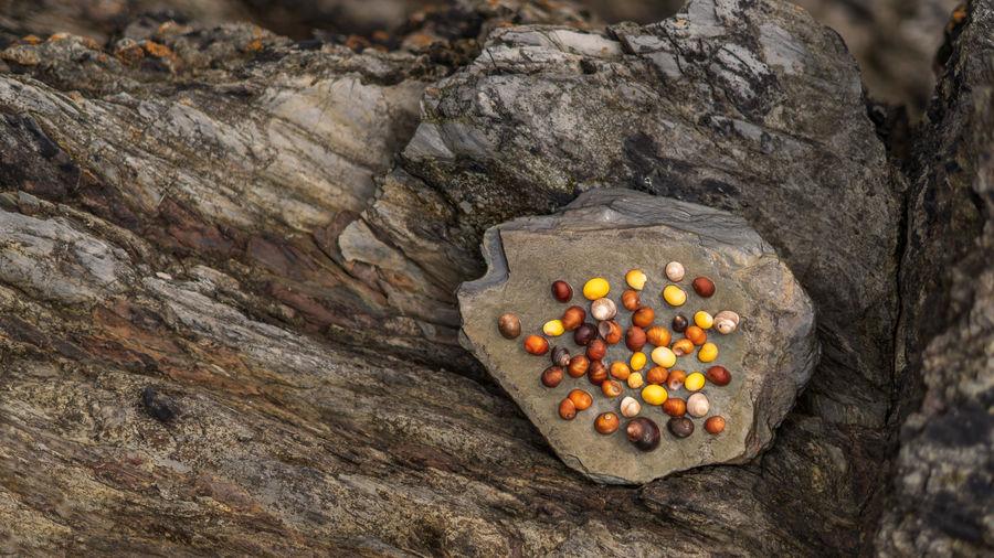 Seascape Rock Shells Autumn colors Nature Energy Rock - Object Close-up Boulder Rugged Rocky Coastline Rough Textured