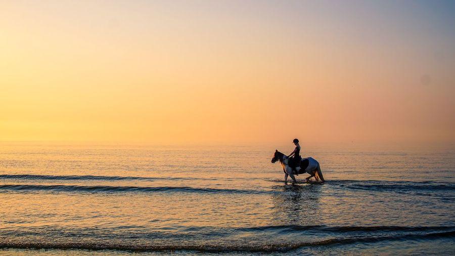 Cinematic Silhouet Horse Sunset Horse EyeEm Selects Water Sky Sunset Sea Horizon Over Water Horizon Scenics - Nature Beauty In Nature Beach Orange Color