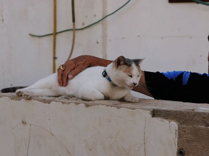 Cropped Image Of Man Pampering Cat On Wall