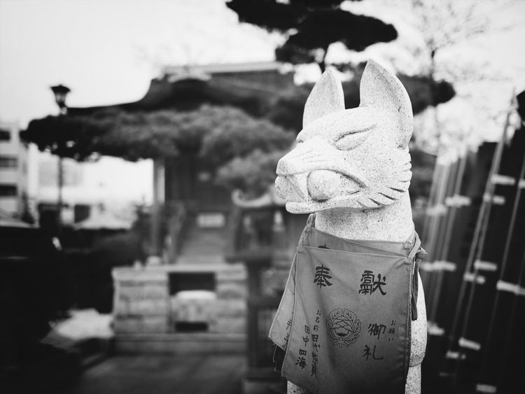 I am a spiritual fox. Blackandwhite Temple Fox