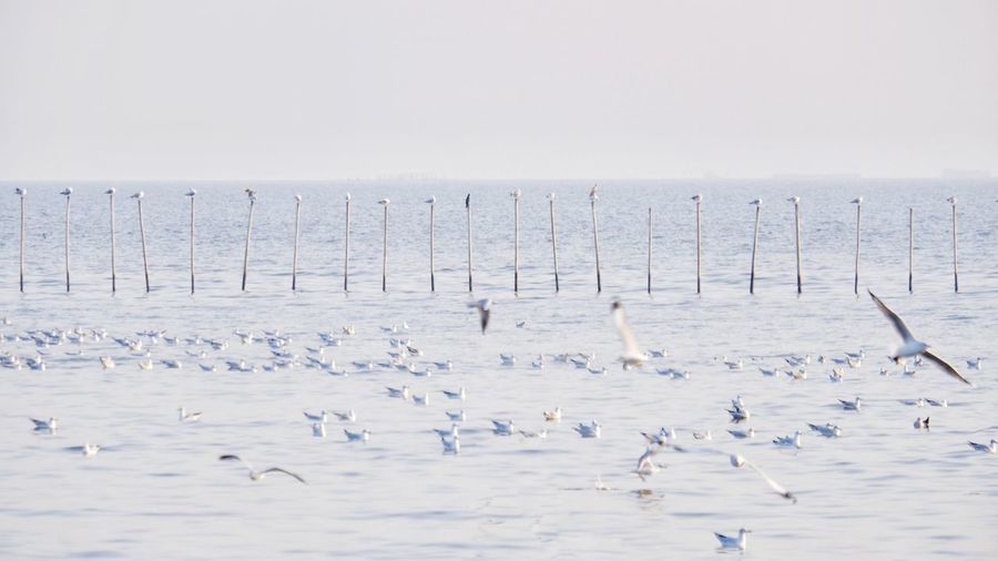 Flock of birds in sea against sky