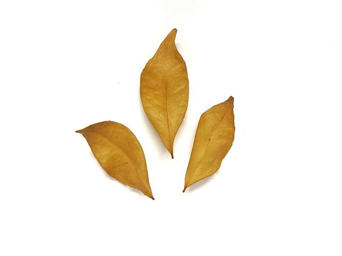 dried leaves on white background. Leaf Autumn White Background Change No People Nature Close-up Dried Leaves Beauty In Nature Studio Shot Leaves