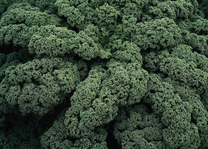 Organic Green Kale Green Color Full Frame Backgrounds Food Food And Drink Close-up Vegetable Freshness Abundance Plant Healthy Eating High Angle View Broccoli Beauty In Nature Pattern Growth Green Field Agriculture Cooking Organic Green Kale Kale Cabbage Vegetarian Food