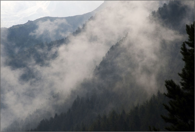 Evening fog in the Alps. Alps Italy Beauty In Nature Cloud - Sky Day Evening Fog Evening Sky Fog Idyllic Low Angle View Mountain Mountain Peak Mountain Range Nature No People Non-urban Scene Outdoors Plant Remote Scenics - Nature Sky Tranquil Scene Tranquility Tree