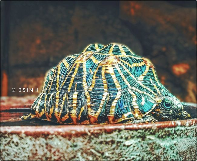 Turtle 🐢 Turtle Love Pet Portraits Mobilephotography Pets Of Eyeem Cute Animal Love Friendship Potrait Honur Power In Nature Outdoors The Week On EyeEm Animal Themes Nature No People Close-up Day