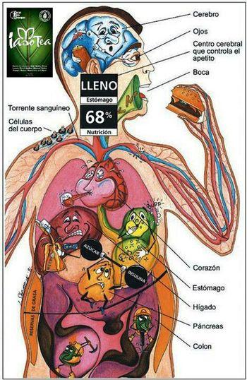 Nutrition Important Natural Way Iasotea