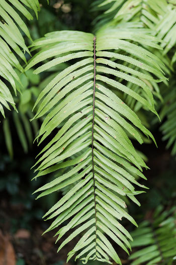 Leaf Plant Part Plant Green Color Growth Focus On Foreground Nature Close-up Day Tree Beauty In Nature No People Outdoors Leaves Natural Pattern Palm Tree Pattern Tranquility Botany Selective Focus Palm Leaf