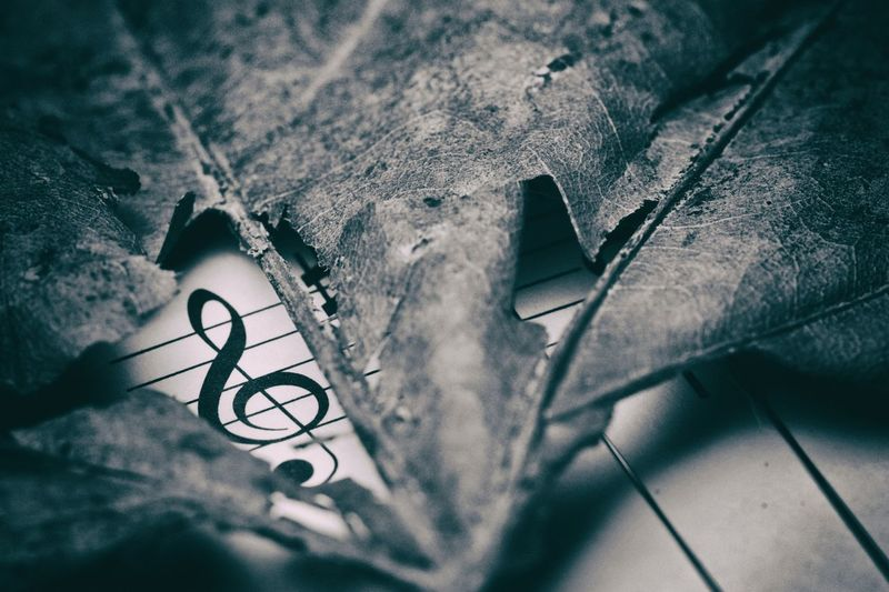 """""""Music does not need a visa to enter your heart."""" ― Sukant Ratnakar Chord Classical Music Clef Close-up Dry Leaf G Clef Indoors  Macro Macro Photography Music Music Book Music Brings Us Together Music Is My Life Musician Quotes Black And White Friday Creative Space"""