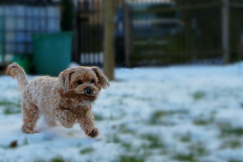 Dog Pets Pet Domestic Animals Animal Themes One Animal No People Outdoors Outdoor Fun Having Fun Outside Playing Playing Outside Blur Snow in Gera, Germany EyeEmNewHere Pet Portraits Shades Of Winter This Is Family